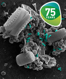 Microbes and where to find them