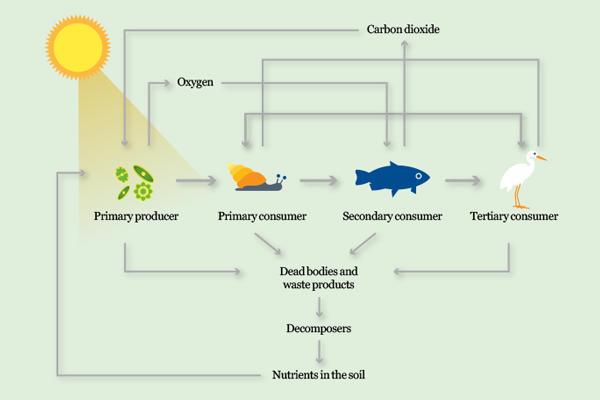 Food chain diagram