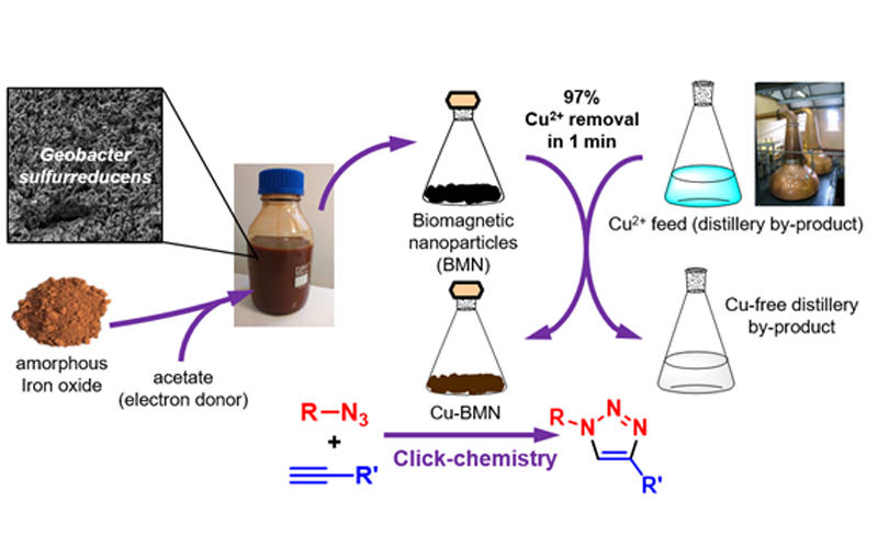 Cu recovered from a distillery by-product using biogenic magnetic nanoparticles can be repurposed as an efficient catalyst for 'click-chemistry'