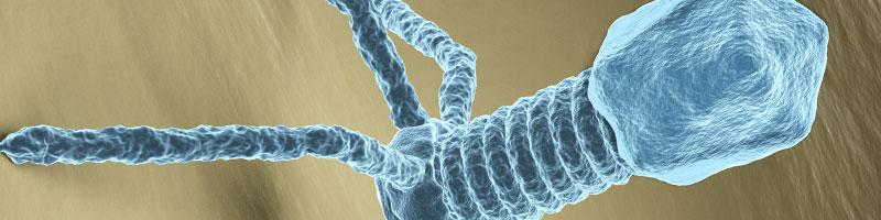 Bacteriophage virus electron microscopy image