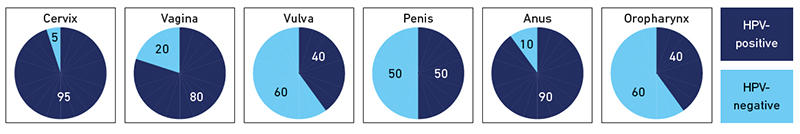 Attributable fraction of HPV in cervical, vaginal, vulval, penile, anal and oropharyngeal cancer.